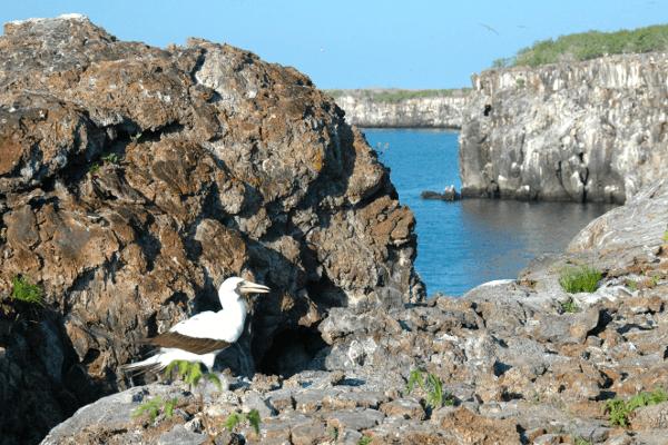 Isla Genovesa