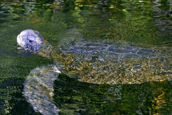 Tortuga de Mar